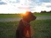 Sunset Boo