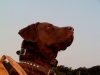 Boone Watching the Sky