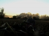 Sun Peeking Though the Trees