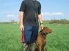 Dog Training - Ben & Boone